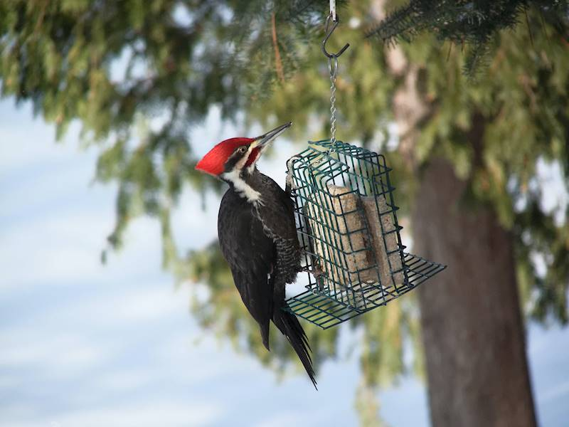 Profitable Bird Feed and Supplies Franchise