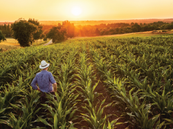Crop Consulting Business