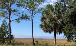 GULF FRONT LAND, STEINHATCHEE, FLORIDA - 4.30 acres