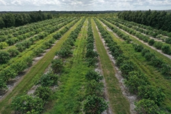 Indian River Marsh Grove - 102.34 Acres